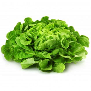 salade feuille de chene verte pièce